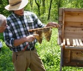 Spikenard Farm Honeybees